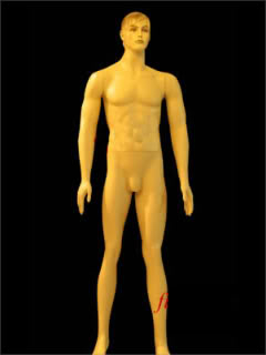 Mannequin Male Skin Color ms-23-s